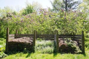 lilacs and compost
